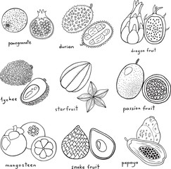 Black and white hand drawn set with tropical exotic fruits. Vector art monochrome coloring page