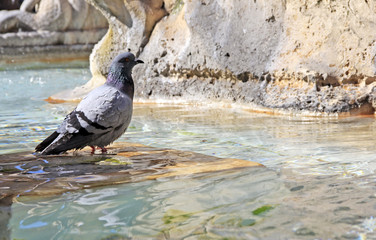 water fountain pigeon