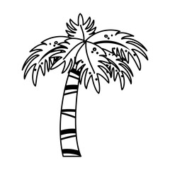palm tree icon image