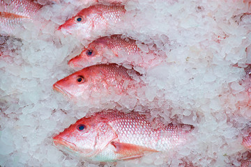 Wall Murals Fish fresh Gulf of Mexico red snapper catch in ice