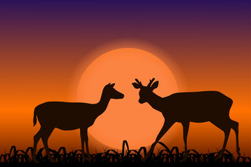 Sika deer with horns. Black silhouettes in sunset. African landscape