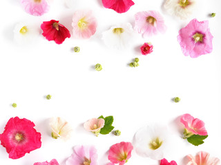Pink mallow flowers isolated on white background. Abstract floral composition. Flower pattern. Frame of plants and flowers. Top view, flat lay.