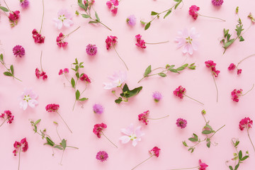 Pink flowers  on a pink background. Abstract floral composition. Pattern of plants and flowers. Top view, flat lay. Floral, plants background.