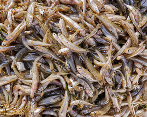 fresh small fry fish closeup for sale, top view