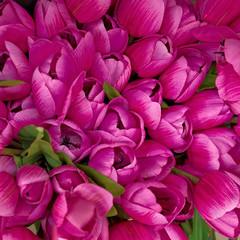 kolorowe ciemne fioletowe fałszywe tulipany, kwiatowy tło