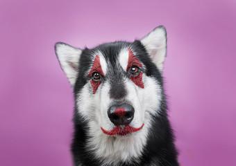 dog with clown makeup