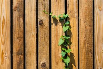 Holztextur mit grüner Rankpflanze