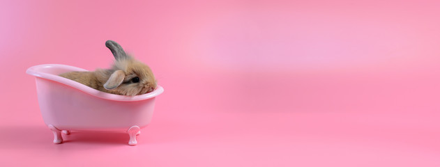 brown fluffy bunny in pink bathtub on pink background Bathing Bunny and copy space for text