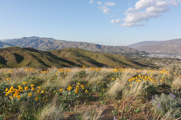 Wenatchee foothills with spring flowers Fotobehang