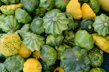 Round summer squash fresh from the farm