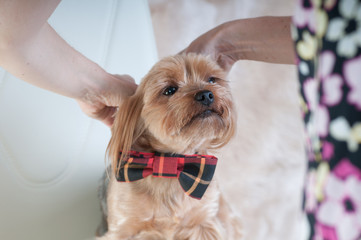 Putting on tie bow
