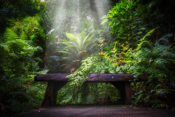 semi tropical landscape with woods and ferns