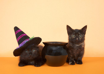two black kittens sitting next to a black cauldron on an orange background. Tortie tabby and black long haired kitten wearing a purple and black witches hat.