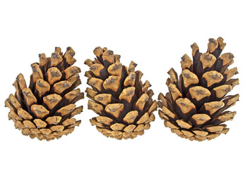 Close-up of three pine cones isolated on a white background