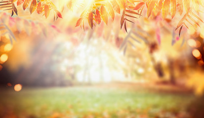 Photo Stands Melon Autumn nature background with colorful fall foliage, pasture and sunbeams