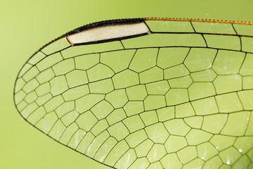 Wings of a dragonfly as a background