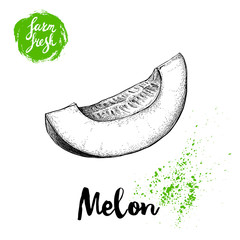 Hand drawn sketch style melon cut isolated on white background. Farm fresh food vector illustration.