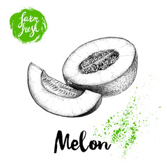 Hand drawn sketch style melon composition isolated on white background. Farm fresh food vector illustration.