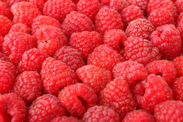 A lot of sweet red raspberries close-up