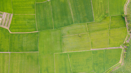 Tuinposter Luchtfoto Background of Fields with various types of agriculture in rural Thailand
