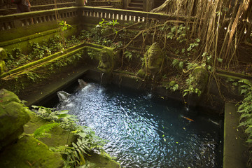 Pool in monkey forest