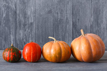 Fall pumpkins background with copy space