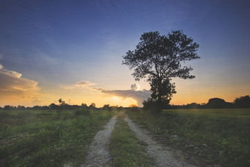A silhouetted tree during sunrise with gravel road creating perspective for the photo.