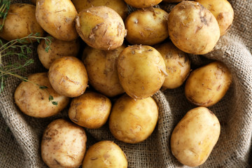 Raw organic potato on sackcloth
