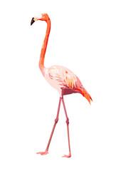 pink flamingo illustration, isolated bird vector on white background