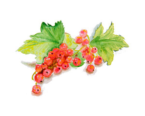 Watercolor illustration Red currant