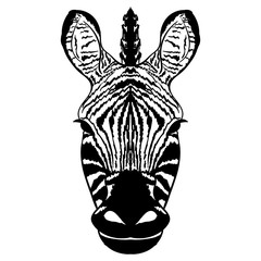 Isolated head of striped zebra sketch