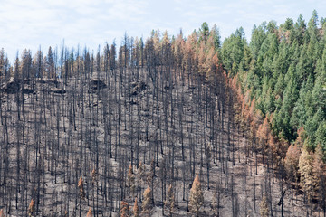 Damage from the Lightner Creek wildfire in Durango, Colorado