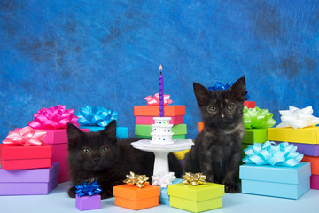 Two black kittens sitting on a light blue surface surrounded by colorful birthday next to small white pedestal with miniature donuts stacked into a birthday cake, one purple candle burning brightly.