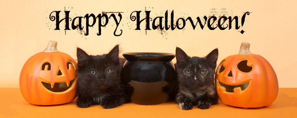 two black kittens sitting next to a black cauldron with pumpkin jack o lanterns on each side, orange background. Banner format. Happy Halloween text.