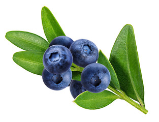 Fototapete - bilberry, blueberries isolated on white