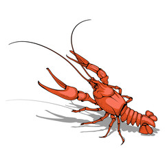 Vector image of  crayfish. Isolated on white background. Ocean Delicacies collection