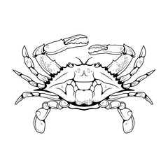 Vector image of an Atlantic crab. Isolated on white background. Ocean Delicacies collection