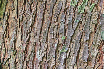 Close up abstract image of bark of mahogany tree showing the detailed textures