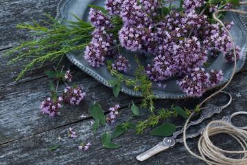 Oregano, tarragon, thyme. Fresh green seasoning on a wooden table.