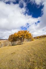 In autumn, trees on the hillside