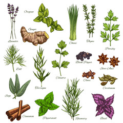 Vector isolated icons of natural spices and herbs