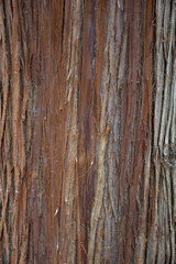 Close up of the bark of a large cedar tree that is brown and gray. The bark is peeling.