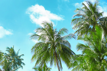 View of beautiful tropical palms against blue sky
