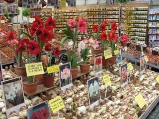 Amsterdam, Mercato dei fiori