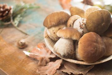 Tasty food - fresh porcini boletus oak muchrooms, high quality, ready to cook