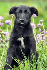 Black puppy for a walk
