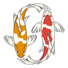 Colored vector illustration with koi carps. Isolated objects on white background.