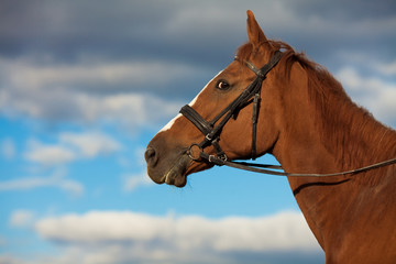 Funny shy horse looking scared posing over sky with rainy clouds. Copy-space. Outdoor shot