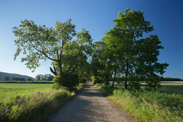 Path horizontal shot