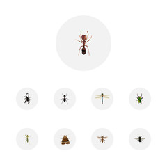 Realistic Emmet, Ant, Wasp And Other Vector Elements. Set Of Insect Realistic Symbols Also Includes Beetle, Dragonfly, Fly Objects.